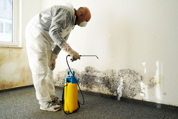 Air Clean Mold Removal Services Los Angeles CA